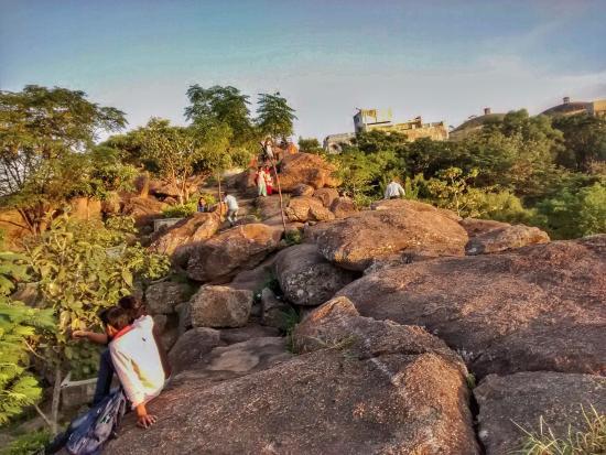 Rock Garden: Rocks