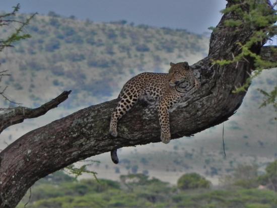 Greg Adventures: Jaguar at Serengeti NP