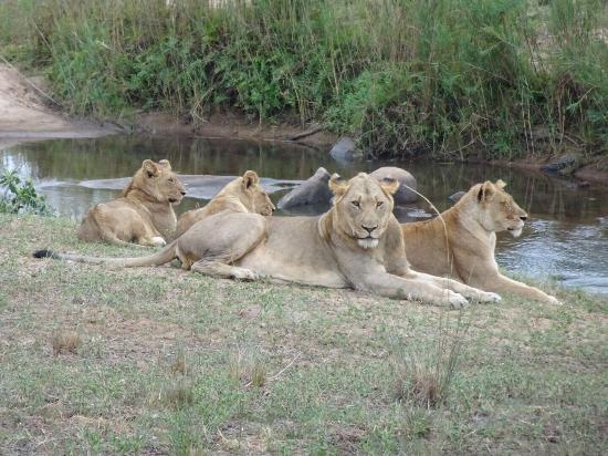 Lion Sands - Tinga Lodge : photo4.jpg