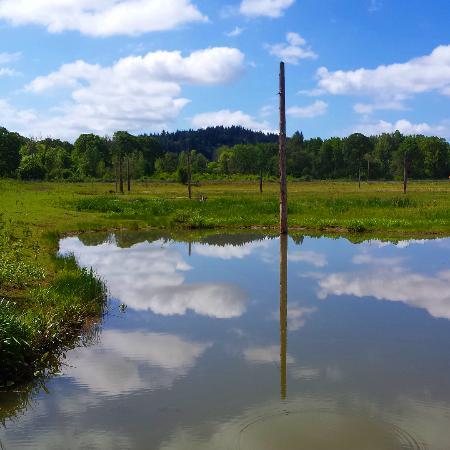 Forest Grove, Oregón: Fernhill Wetlands