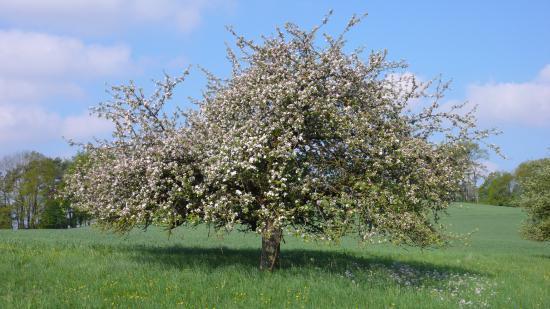 "Grasellenbach, ألمانيا: der ""blühende"" Odenwald"