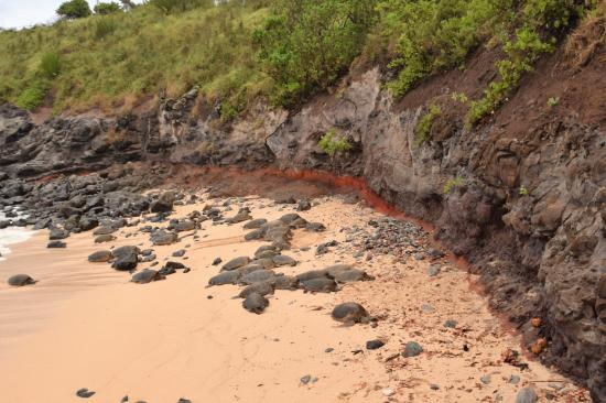 Paia, Hawái: Check out all the turtles and the cool RED layer in the rock
