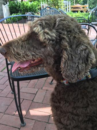 Ellicott City, MD: Doggies welcome on the patio!!
