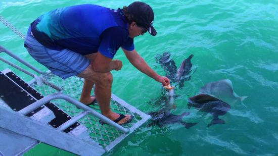 Isla Magnetic, Australia: Adam feeding the fish, and then you get to swim with them and feed them.
