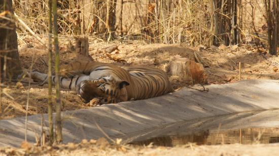 Awesome Trip to Bandhavgarh National Park, Stay at Bandhav Vilas