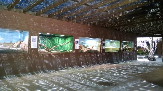 """Litchfield Park, AZ: """"Dragon World"""" which was lizards and snakes and some gators."""