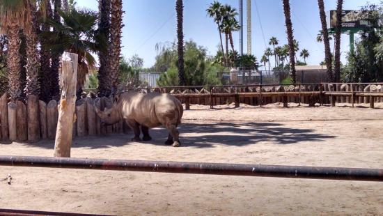 Litchfield Park, AZ: The wite rhino.