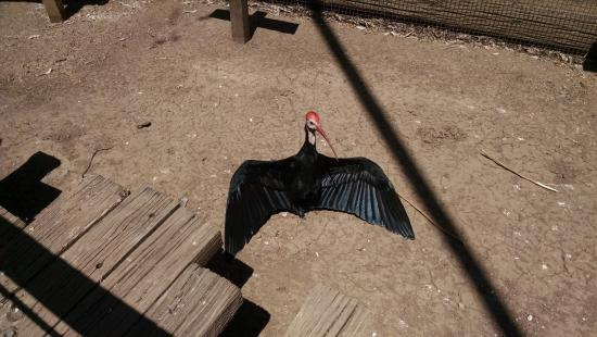Litchfield Park, AZ: One of the birds in the small aviary.