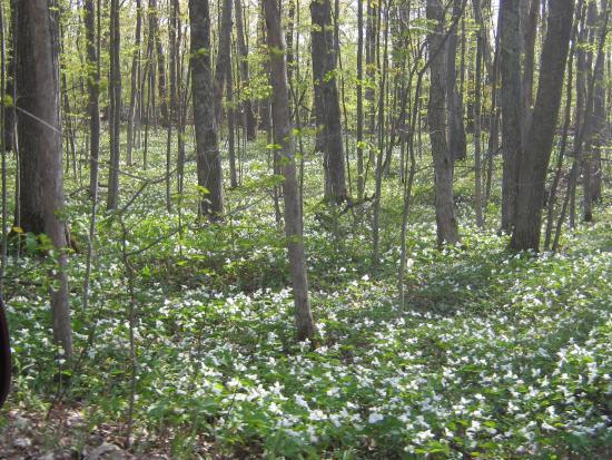 Emmet County, MI: lovely spring flowers