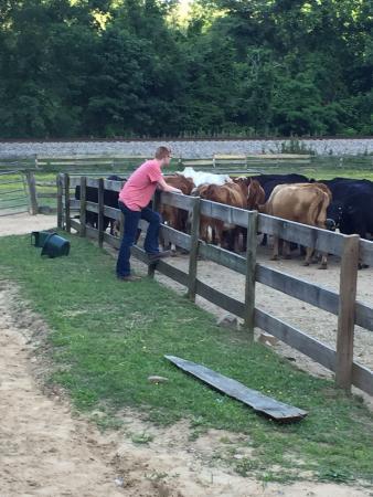 Del Rio, TN: Cattle Corrals