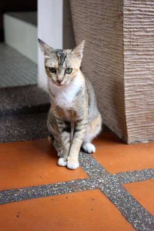 Jonker Boutique Hotel: Resident Cat