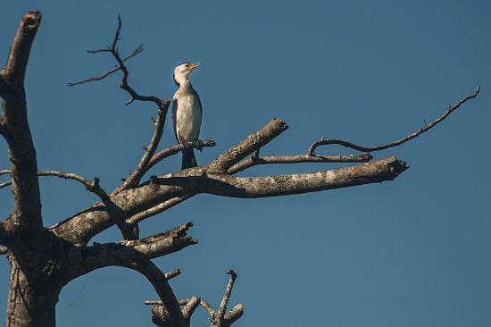 Tumbulgum, Australien: Wildlife