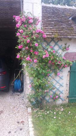Oisly, Francia: 20160527_090620_large.jpg
