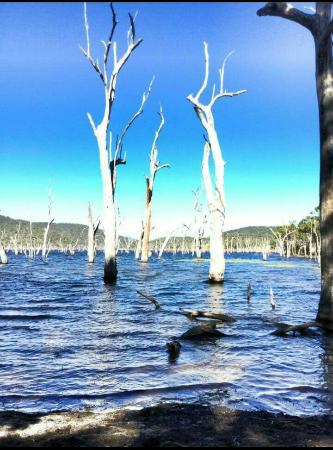 Eungella, Australia: Mysterious trees in water