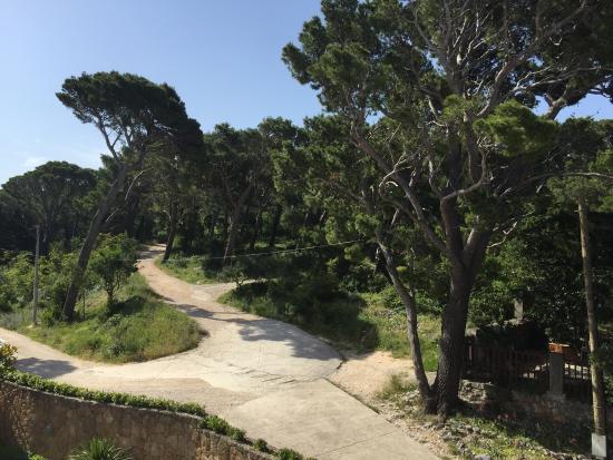Park šuma Osejava