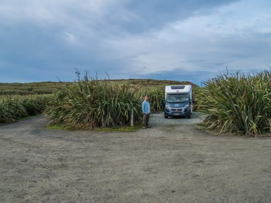 Curio Bay Camp Ground: Camping plots are protected by tall flax bushes