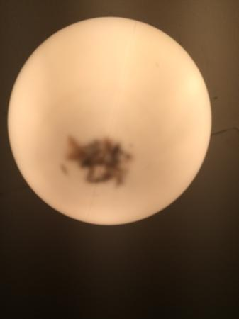 Bathroom Light Shade Picture Of Woodland Lodge Hoddesdon