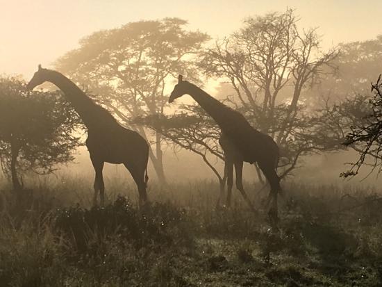 Bonamanzi Game Reserve: photo1.jpg