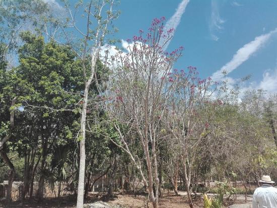 Piste, Μεξικό: Ruinas Chichen itza