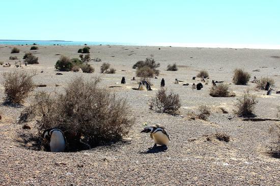 Forastero Tour Puerto Madryn