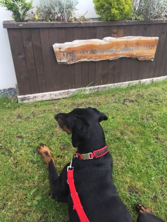 Kidwelly, UK: #ZacTheDoberman patiently waiting for lunch at this lovely cafe