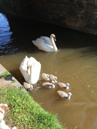 Middlewich, UK: photo6.jpg