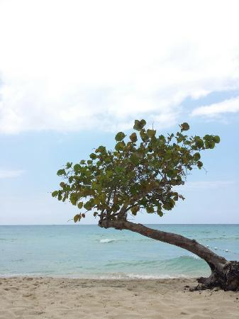 Shields Negril Villas: Sheilds Negril.          Bird in Lime Tree Robinson's Property-Race Course.Jumper-family dog.Sun