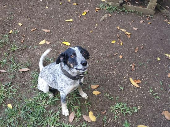 Shields Negril Villas : Sheilds Negril.          Bird in Lime Tree Robinson's Property-Race Course.Jumper-family dog.Sun