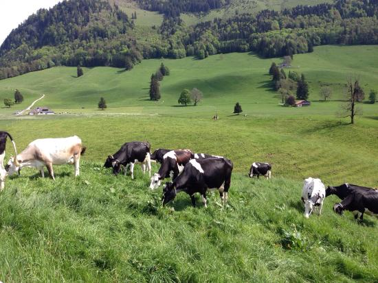 Broc, Sveits: photo0.jpg