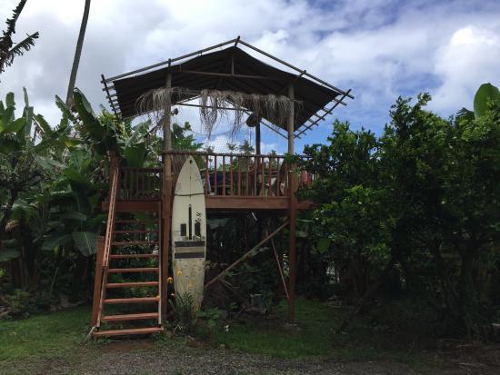 Wild Ginger Inn Hotel & Hostel: Garden