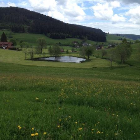 Waldau, Deutschland: Kleiner See hinter dem Gasthof, Spazierweg um den See herum