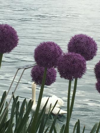 Vitznau, Suiza: photo2.jpg