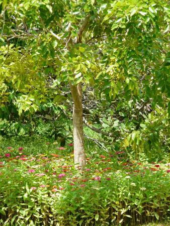 Tissamaharama, Σρι Λάνκα: Butterfly garden