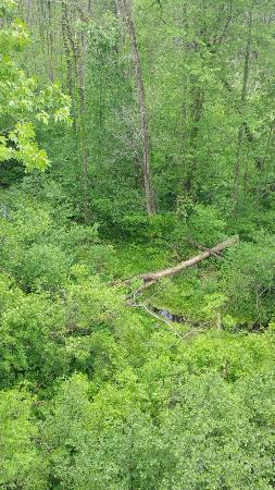 Sarett Nature Center: 20160528_111230_large.jpg