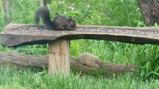Sarett Nature Center Trips