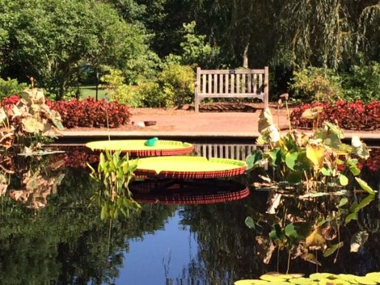 Хантсвил, Алабама: Frog Pond