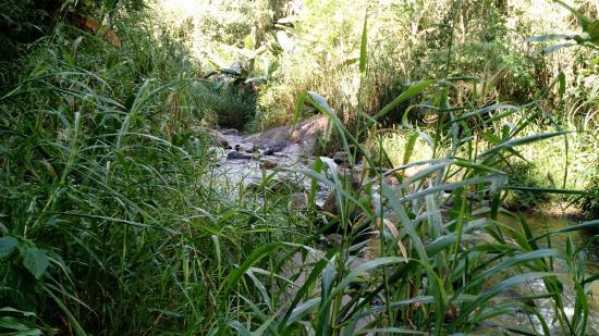 Pousada Jardim Real : Trilha dentro da propriedade para a cachoeira
