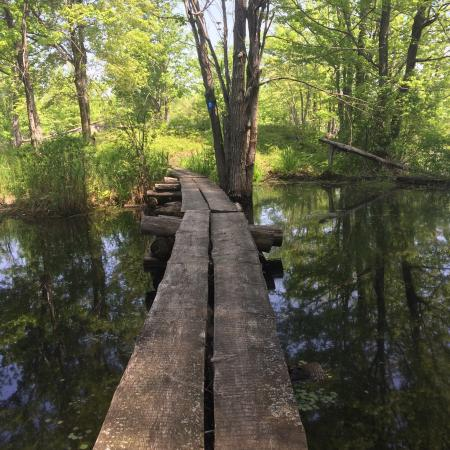 Verona, Kanada: Dedication trail. Beaver dams and boardwalks :)