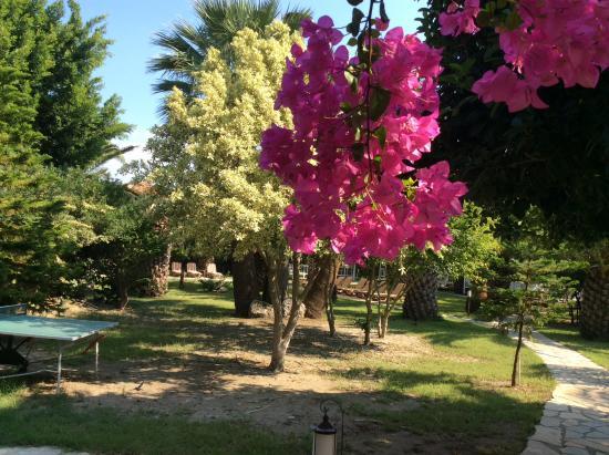 Club Alla Turca: Hotel grounds