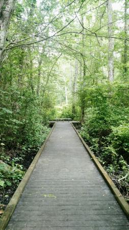 Suffolk, Вирджиния: Great Dismal Swamp National Wildlife Refuge