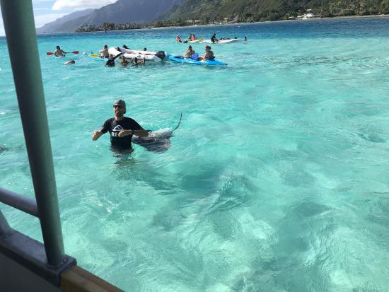 Moorea, Fransk Polynesien: photo0.jpg