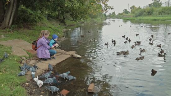 Manor Park Country Park: Come and feed our ducks !!