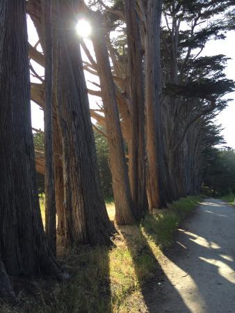 Moss Beach, CA: photo2.jpg