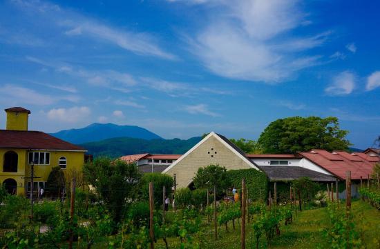 St.Cousair Winery Honten