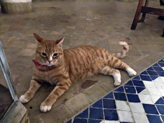 Riad de Vinci: 飼い猫のヴィンチ