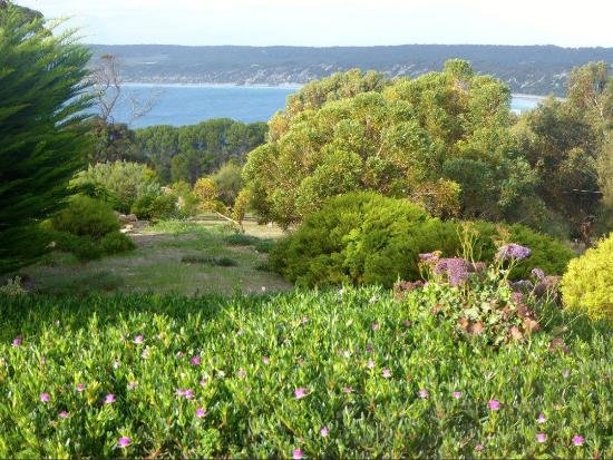 Emu Bay Holiday Homes: View from our cottage window