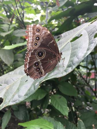 Butterfly Haven: photo2.jpg