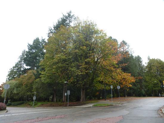Friendship Gardens & Tipperary Park: A corner of the park