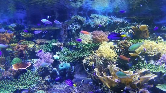 名古屋港水族馆