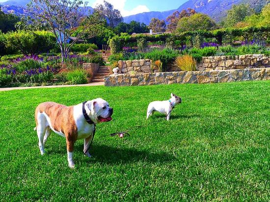 San Ysidro Ranch, a Ty Warner Property: Dog friendly property amazing staff
